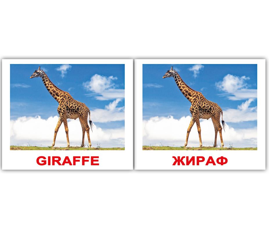 Рифма к слову жираф