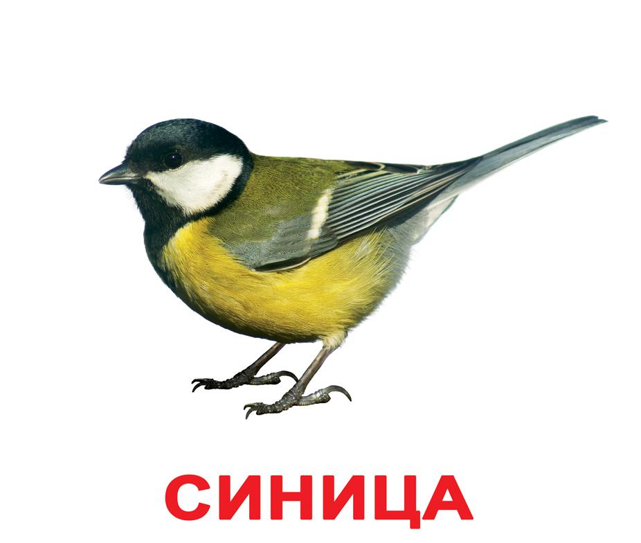 Фото для детей сова