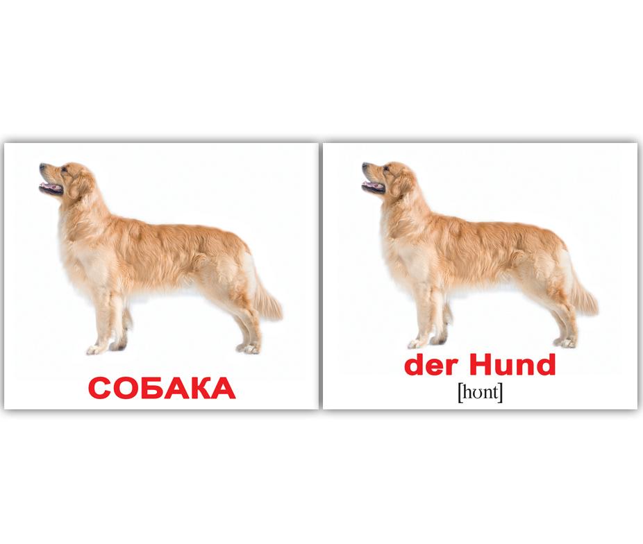 на прогулке, в машине и тд набор содержит 20 двухсторонних карточек с изображениями домашних животных